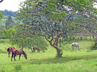 Erica Ridley in Costa Rica: horses at Villa Paradise