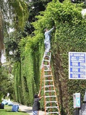 080411-wll-ladders.jpg