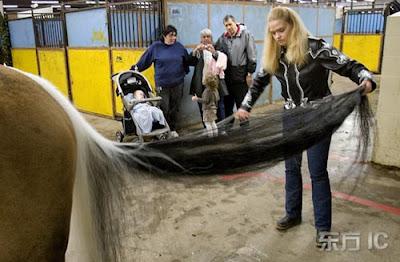 Dünyanın En Uzun Kuyruklu Atı..
