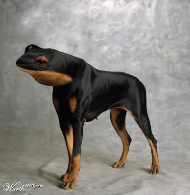 evrim teorisi kanıtlandı :))