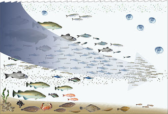 Fishing Down the Foodweb