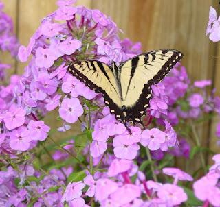 http://1.bp.blogspot.com/_owtjMe-eqP4/SNXIPohbEiI/AAAAAAAAAEc/2y85ryQ-ttg/s320/fotos-mariposas-flores.jpg