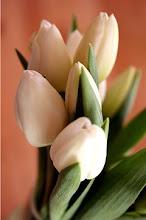 Flores para você!!