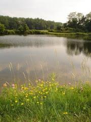 Porcupine Pond