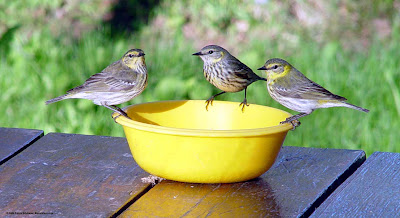 Is Feeding Jelly Really Okay For Birds