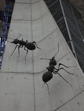Hormigas en el Parque de las Ciencias