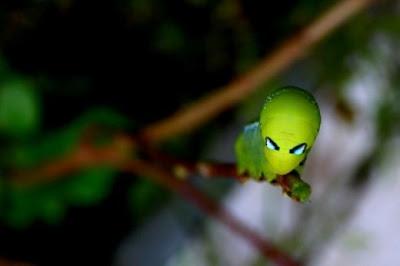 Imagenes Insectos: insecto que parece extraterrestre