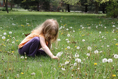 O' Dandelion Song