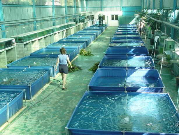 Sistemas de producci n acu cola sistemas de producci n for Tanques circulares para acuicultura