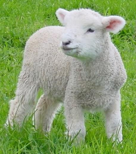Sermon Feed My Sheep: FBC Girard, IL: Scripture For Sunday, August 15th: John 21