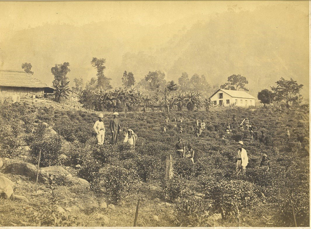 Tea pickers and owners, Darjeeling, c.1880's