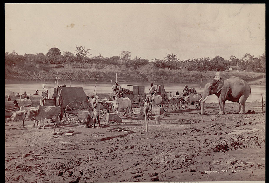 Assamese Men in Costume with Elephant and Ox Carts Transporting Tea
