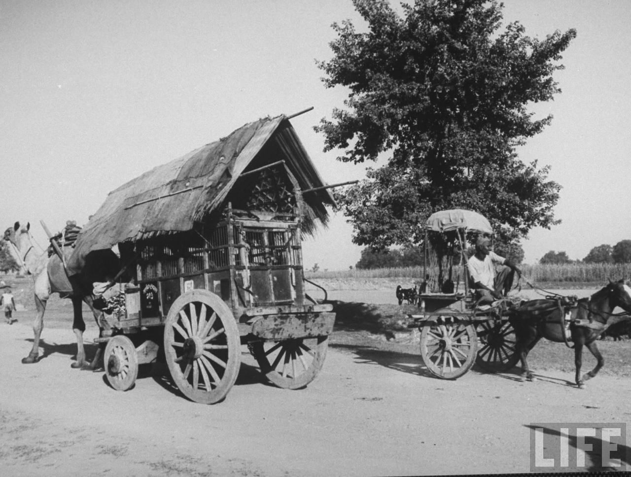 Indian carts on road near Indian farm village of Gaonkhera - October 1962