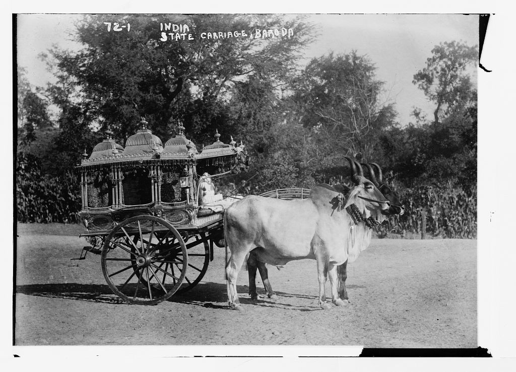 Sacred bullocks before state carriage - Baroda