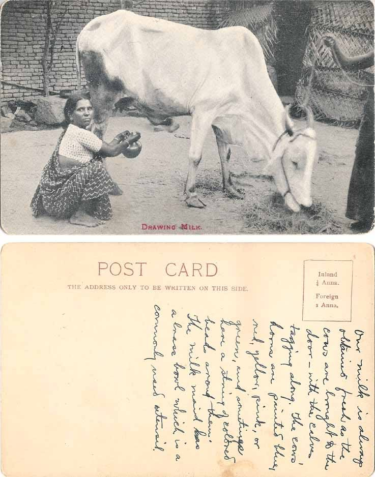Postcard of Indian Woman Drawing Cow Milk