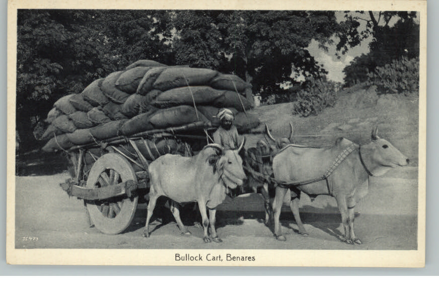 Image result for ox carts bagan