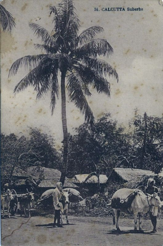 Vintage Postcard -  Suberbs of Calcutta (Kolkata) India - 1920s