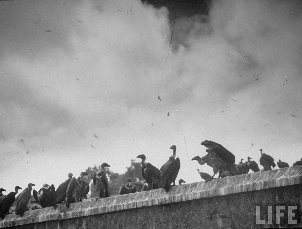 Vultures sitting on the roofs of a building while corpses lie below, abandoned in alleyway after bloody rioting