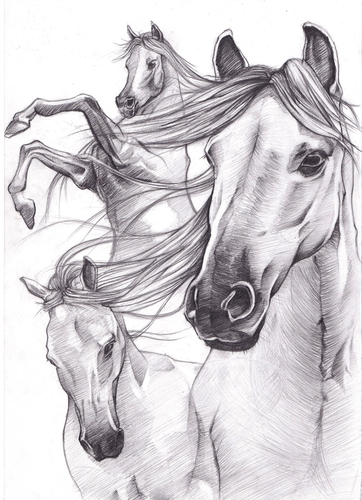 Horse Drawing | Learn How To Draw Horses | Diana Hand ...  |Horse Art Drawings