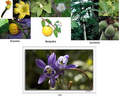 Ejemplos de flores unisexuality