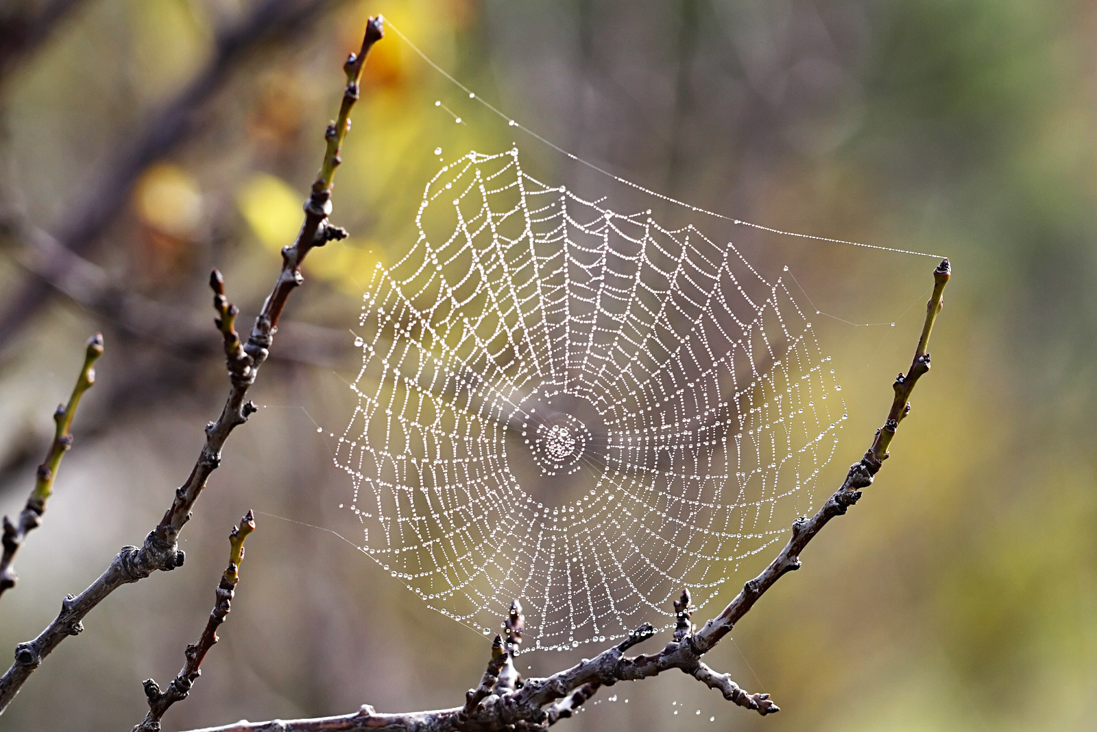 Spider Facts And Information For Children
