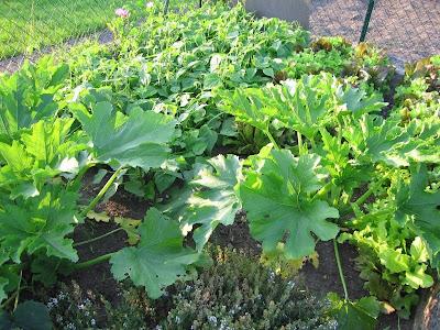 Grains de sel cultivons notre jardin - Candide il faut cultiver notre jardin ...
