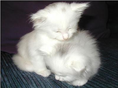 Gatitos y Perritos  bebes =)