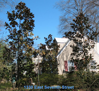 Plainfield Trees Southern Magnolia