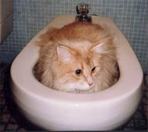 Cats do like toilet funny cat pictures for Commode kitty
