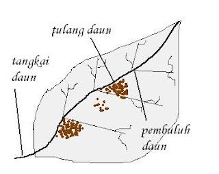 Car Radiator Plugs likewise Diagram Tangkai Daun likewise Gambar Diagram Uji T moreover Upstairs Wiring Diagram furthermore  on wiring diagram radio viva