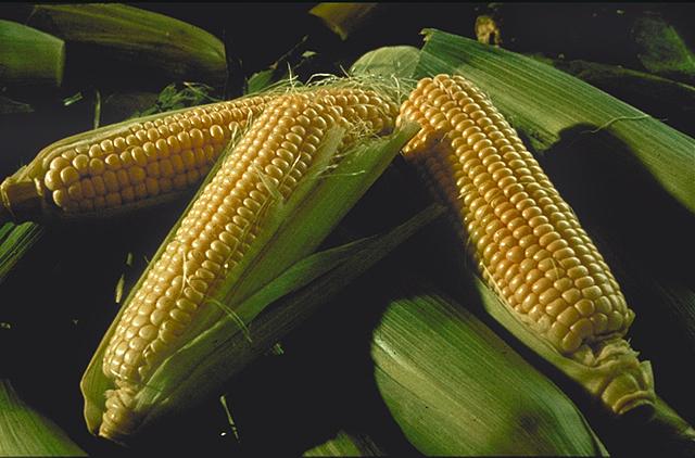 Corn Roast this weekend!