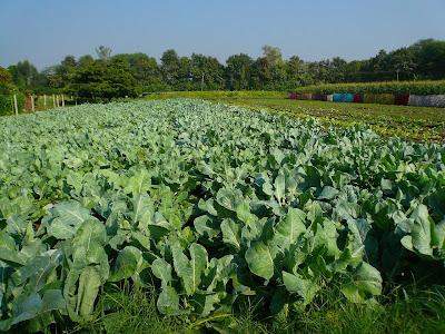 Fermiers bio heureux en Inde : le bonheur est dans le pré ! 3