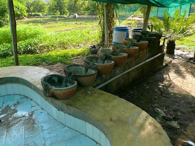 Fermiers bio heureux en Inde : le bonheur est dans le pré ! 2