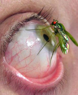 [dengue.jpg]