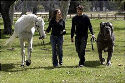 horsedog O maior cachorro do mundo   Curiosidades
