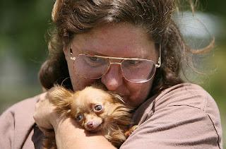29373383 O menor cachorro do mundo   Curiosidades