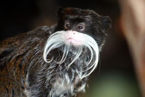 ciência vida animais pouco conhecidos