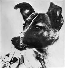 La perra Laika fue hace 50 años el primer terrícola en el espacio