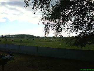 ganaderia de reses bravas orilla Ebro