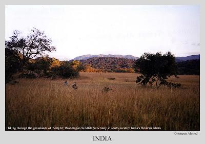 The trek amidst grassslands from Somahole to Aabylu near Teralu village in Brahmagiri wildlife sanctuary, Kodagu District, Karnataka