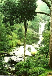 The picturesque Iruppu falls inside Brahmagiri wildlife sanctuary in Kodagu (Coorg) District of Karnataka