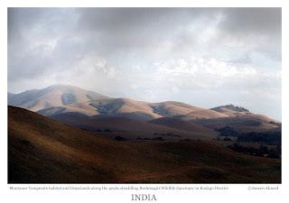 Montane temperate forests (also known as sholas) and grasslands in Brahmagiri wildlife sanctuary, Kodagu district, Karantaka