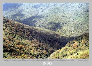 The semi-evergreen forests around Somahole in Brahmagiri wildlife sanctuary, Kodagu District, Karnataka