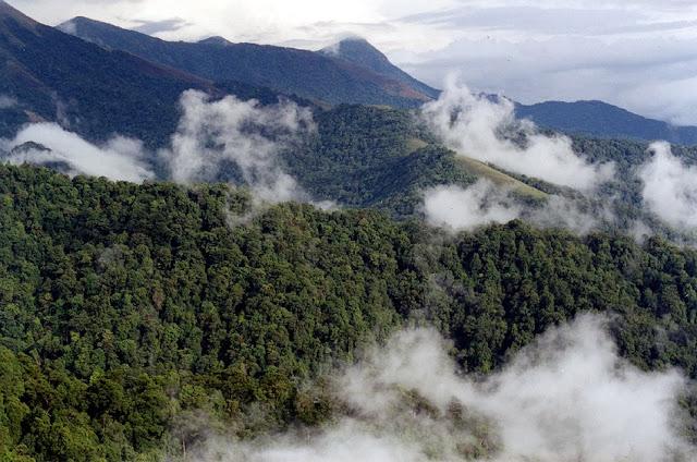 Rainforests of Talakaveri wildlife sanctuary in Karnataka's Kodagu (Coorg) District along its borders with Kerala in the Western Ghats region