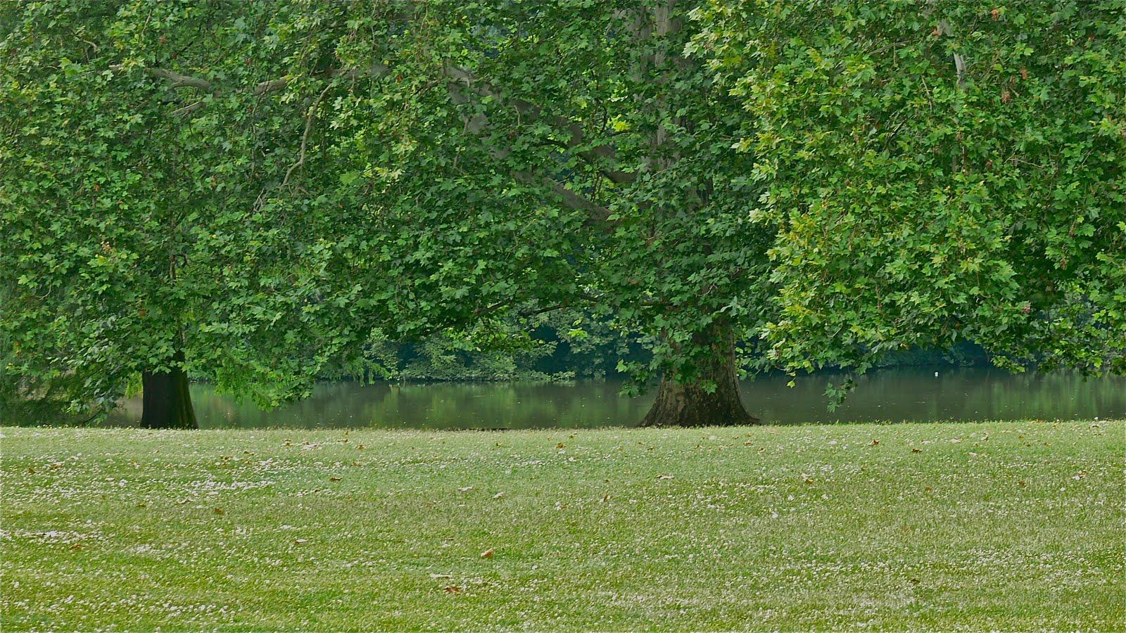 Romantic Castle Park - Martonvásár | Cultivated Garden