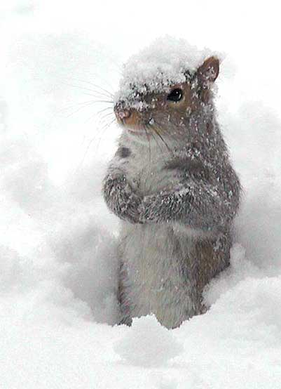 Image result for good morning snowy day