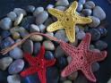 3   estrellasSsS