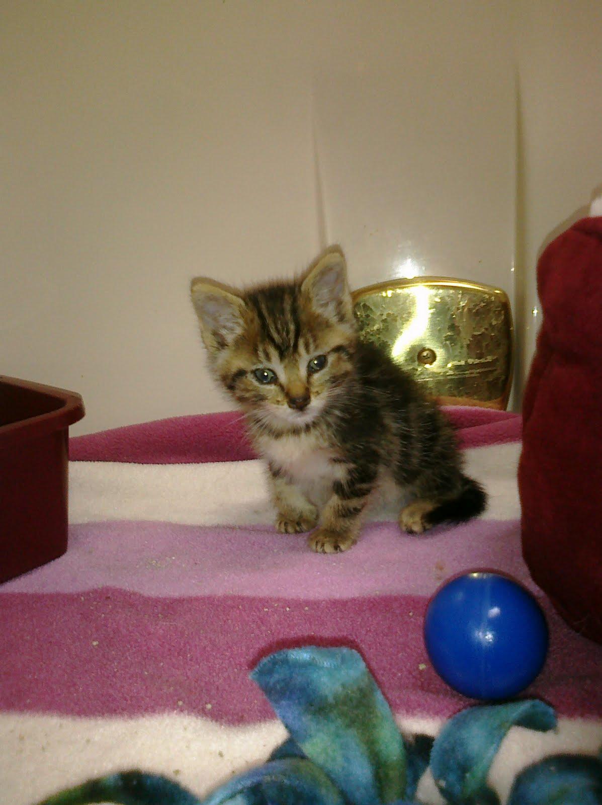Feline Rescue Cat Tales The Cutest Kitten Ever