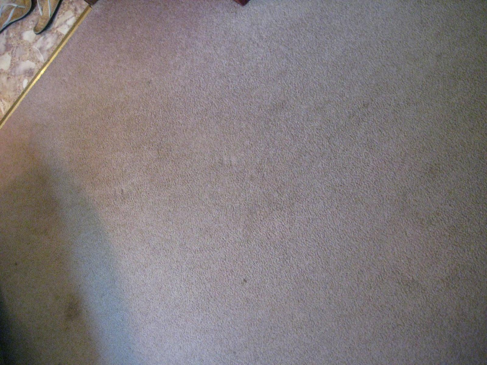 Quarry Orchard Homemade Carpet Shampoo