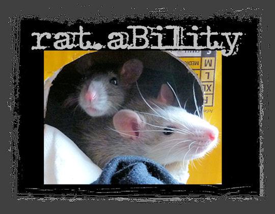 Rattenschaden